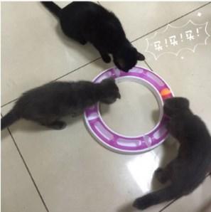 Kedi Oyun Çemberi Oyun Tüneli 2