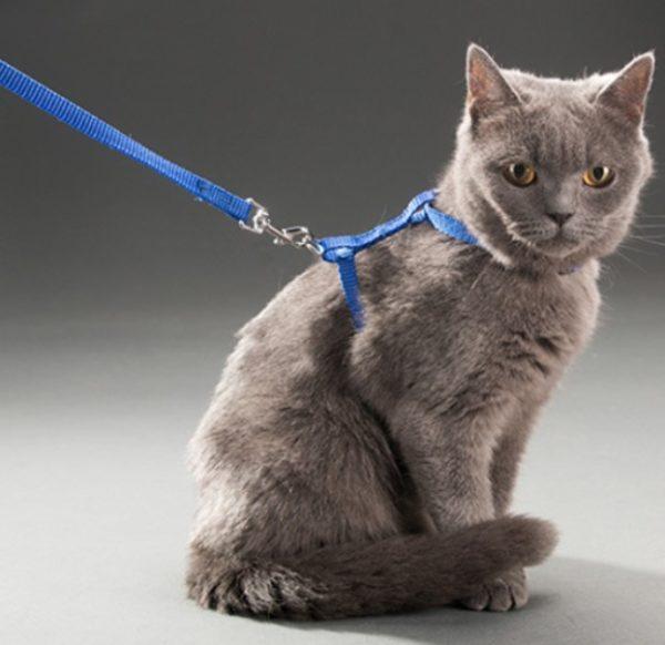 Ayarlanabilir Kedi Tasması 120 cm (4 Renk) 2