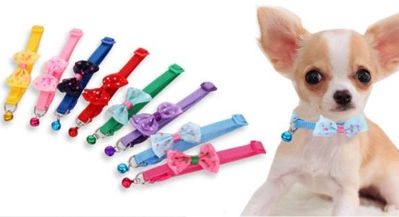 Papyon Tasarımlı Kedi Köpek Tasması 3